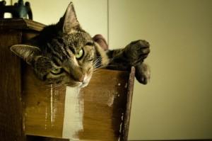 Cat lady land...