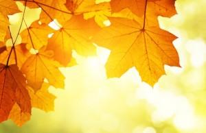 I love fall... or do I?