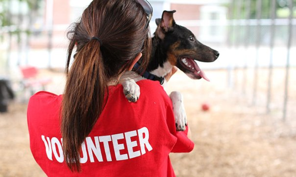 Volunteering: chew on that!
