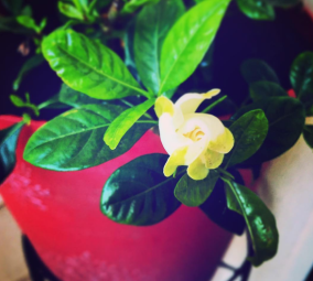 Finally bloomed!
